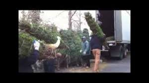 hmongbuy net how to sell christmas trees in nyc