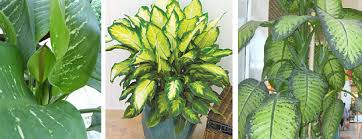 indoor trees that don t need light houseplants what are some low maintenance plant choices for