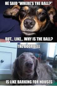 Stoned Dog Meme - stoner dogs album on imgur