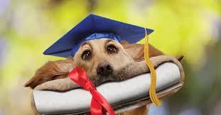 dog graduation cap dog with graduation cap and degree bajiroo