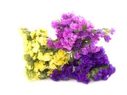 Flowers Colors Meanings - statice flower meaning flower meaning