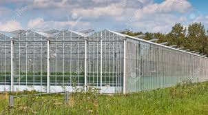 close up of a modern dutch greenhouse complex with open glass