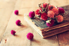 Drying Flowers In Books - old books with dry flowers stock photo image 43175243