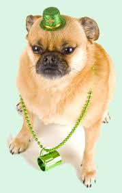 8 st patrick u0027s day limericks as written by dogs