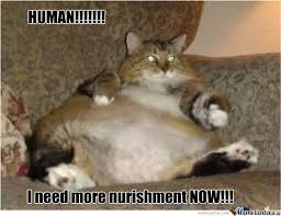 Fat Cat Meme - fat cat 3 by stacy101 meme center