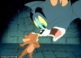 the mouse that roared real tom and jerry display sees rodent