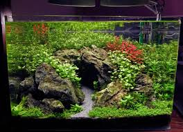 Aquascape Online 15 Gal Planted Tank The Cave Youtube Aquarium Pinterest