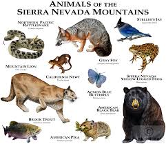 Nevada wild animals images Animals of nevada google search classification of living jpg