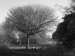 leafless definition and meaning