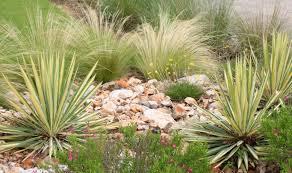Best Plants For Rock Gardens Best Plants For Rock Gardens Home Outdoor Decoration