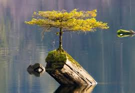 the tree on the lake lakes lonely and vancouver island