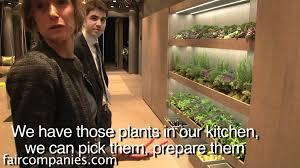 a mediterranean kitchen indoor garden with drip system youtube