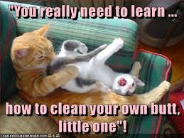 Memes Clean - lolcats clean lol at funny cat memes funny cat pictures with