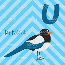 imagenes del animal urraca cartoon zoo alphabet with animals spanish name u for urraca stock