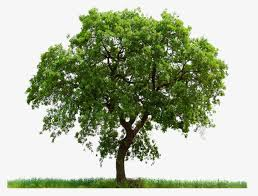 trees trees leaves tree trees leaves tree png image and clipart