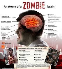 Anatomy Of The Brain And Functions The Science Of Zombies And How To Avoid Becoming Their Dinner