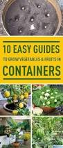 10 Vegetables U0026 Herbs You by Indoor Vegetable Gardening 37 Edibles You Can Grow Indoors In The