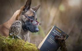 owl and reading a book hd desktop wallpaper instagram photo