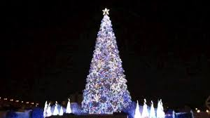 best christmas tree world s best christmas tree listed in the guiness book of records