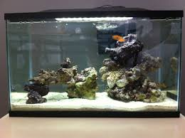 Live Rock Aquascaping Ideas Thoughts Ideas On My Scape Aquascaping Forum Nano Reef Com