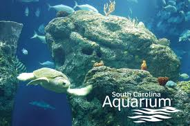 historic city tour and s c aquarium combo