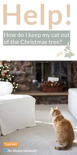 how to keep kitten out of christmas tree part 19 cats in