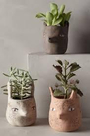 452 best skuş ve kaktüş images on pinterest plants gardening