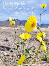 mojave desert native plants super bloom the impossible death valley and positivity