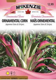 ornamental corn japanese stripes salisbury grow store