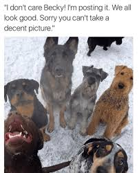 Dogs Memes - that one person who always ruins the perfect group photo dogmom