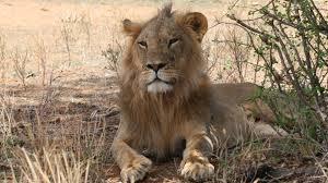 sle resume journalist position in kzn wildlife ezemvelo accommodation home