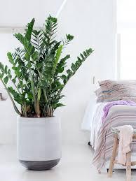grünpflanzen im schlafzimmer die richtige zimmerpflanze für das schlafzimmer instagram und