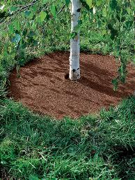 coco fiber mulch tree rings gardener u0027s supply
