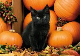 halloween pumpkin autumn wallpapers gallery image mrfab
