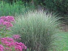 p duke gardens durham nc uses ornamental grasses