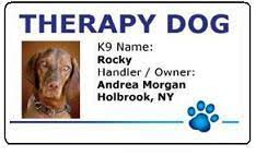 Comfort Dogs Certification Working Service Dog Service Dog Pvc Id Card
