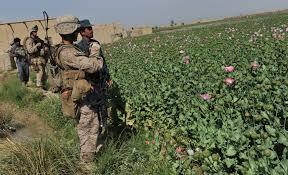 opium trump is fueling war with taliban by allowing afghanistan u0027s opium