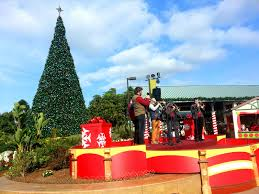 the festive and family fun christmas celebration at seaworld san