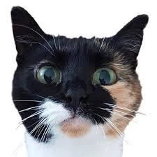 Jacebrowning Memegen The Open Source Meme Generator By - reinholdsson thomas reinholdsson starred 盞 github