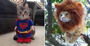 Animal Halloween Costumes 20 Funniest Costumes Twin Kids Wear Halloween