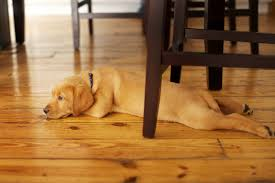 Best Flooring For Pets Reliable Dogs And Hardwood Floors Best Floor For Pets Coverings