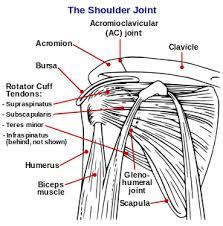 Human Shoulder Diagram Shoulder Problem Wikipedia
