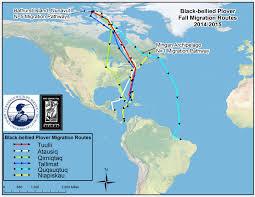 St Lawrence River Map The Center For Conservation Biology U2013 Black Bellied Plovers