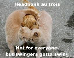 French Memes - lolcats french lol at funny cat memes funny cat pictures with