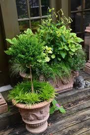 pot en fonte 32 best coleus in pots images on pinterest pots garden ideas