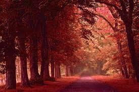 imagenes de otoño para fondo de escritorio fondo pantalla bosque otoño