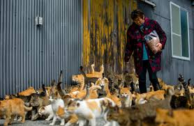 cat island woman feeds cats on aoshima also known as cat island japan aww