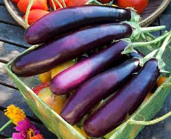 growing eggplant bonnie plants