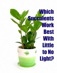 house plants no light the great thing about using succulents to decorate your home is