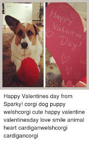 Cute Valentine Meme - a d a happy valentines day from sparky corgi dog puppy welshcorgi